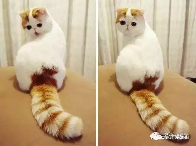 Uno de los gatos mas hermosos