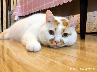 Gato rural chino