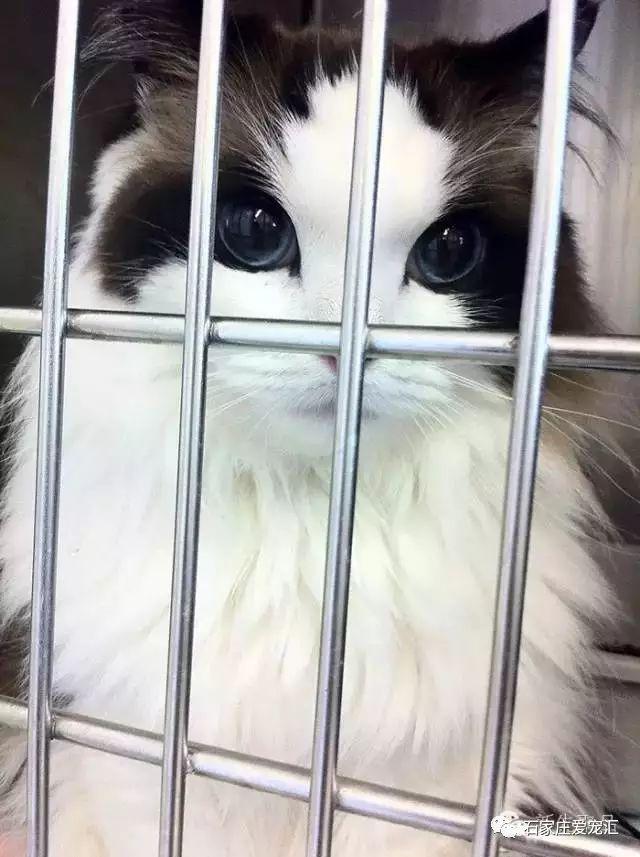 Mimi es una gata de hermosos ojos cristal.