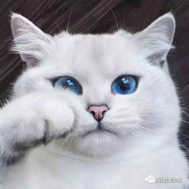 Cat Coby con sus ojos cautivadores te dice que es el mas hermoso de la galaxia.