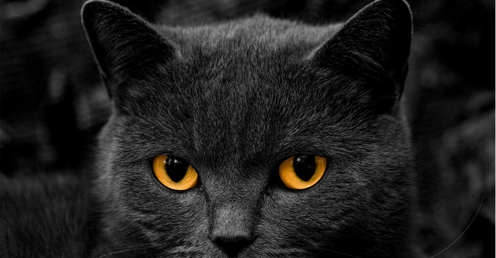 Los gatos mas hermosos que veras hoy